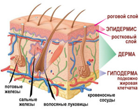 Удаление фурункула хирургом: принципы терапии