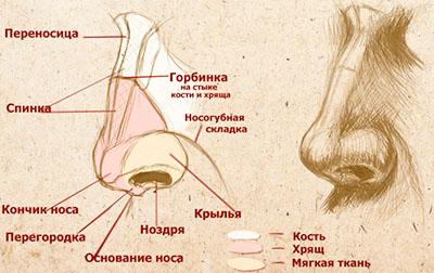 Прыщ на носу: примета расскажет, на что обратить внимание